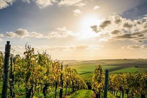 atelier vins Annecy;découvrir les vins;ateliers en anglais; soirée vins en anglais